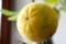 黄熟した「カラタチ(枳殻)」の実。(29.9.15)