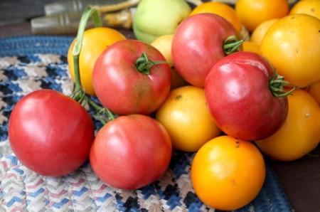 縁側に置いたトマトにも、日が差し込んで…。(29.9.21)