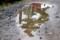 水溜りに、「リギダマツ」が写り…。(29.10.7)