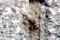 メスの「エンマコオロギ(閻魔蟋蟀)」が塀のブロックに…。(29.10.10)