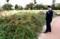 「コトネアスター」の植裁土手に、市長を案内。(29.10.28)