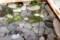 「ヒカリゴケ」が発生している、大きく深い野菜室。(29.11.10)