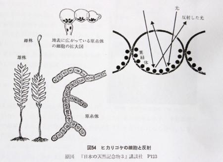 『佐久市志 自然編』「ヒカリゴケの細胞と反射」(29.11.10)
