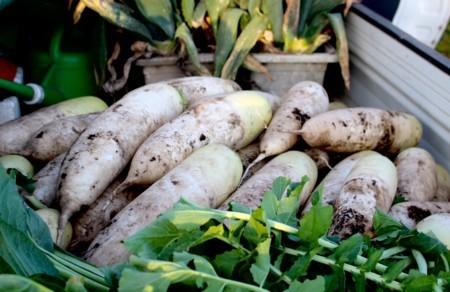 野菜の収穫、軽トラに積んで…、(29.11.13)