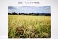 「石鳥谷新聞」から、黄金の稲田。(29.11.16)