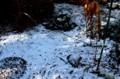 内陸の佐久地方にも、冬型の雪が…。(29.11.21)