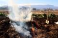 畑ゴミの焼却作業。(29.11.29)