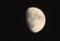 東の空に昇った、「十月十二日」のお月さま。(29.11.29)(17:19)