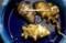 賢治も栽培した「キクイモ(菊芋)」(29.12)
