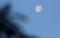 西空に、「十月十八日」のお月さま。(29.12.6)