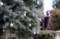 「ブルーアイス」、シンプルなクリスマスツリー。(29.12.6)