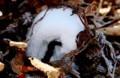 「氷華」、見事な自然の造型。(29.12.7)