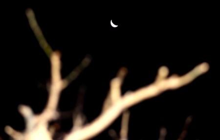 梅の枝の間に、昨夜のお月さまが…。(29.12.13)(6:19)