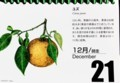 『北海道花暦』・本日は「ユズ(柚子)」(29.12.21)