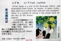 英語歳時記は、ユズ citrus junos