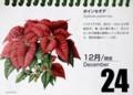 クリスマスを彩る「ポインセチア」(29.12.24)