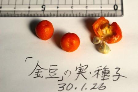f:id:yatsugatake:20180126111602j:image