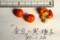 「キンズ(金豆)」の果実と種子。(30.1.26)