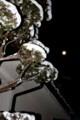西空高く、「昨夜・十七日」の月が…。(30.2.3)(5:02)