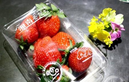 2月初めにいただいた「湘南イチゴ」。(30.2.)