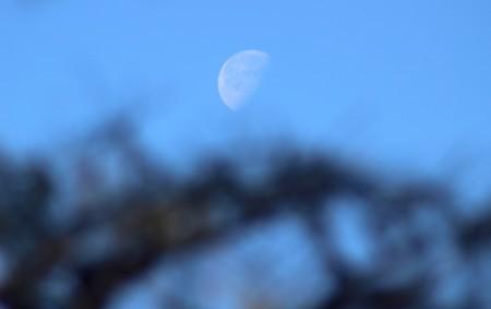 「昨夜・臘月二十日」のお月さま。(30.2.6)(9:05)