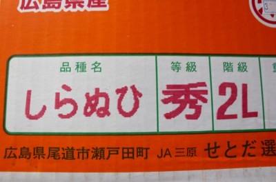 「広島県瀬戸田産しらぬい」(30.2.23)