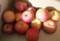 納戸で、残りの「ふじりんご」(30.3.19)