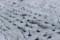 春の雪を被る、「玉葱」(30.3.21)