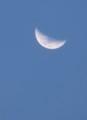 頭の天辺に、「二月七日」のお月さまがかかる。(30.3.23)(17:45)