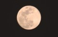 空高く昇った、「如月・望月」。(30.3.31)(19:20)