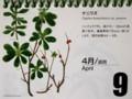『北海道 花暦』、「ナニワズ」。(30.4.9)
