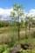 枝葉を整理した、「賢治ガーデン」、2本の「やまなし」(30.5.4)