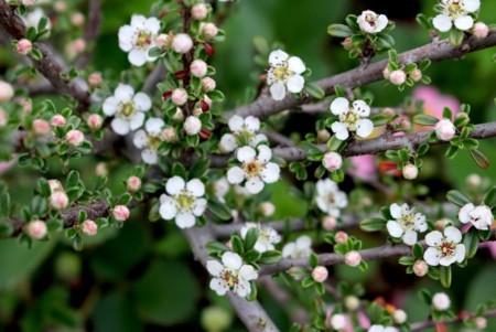 小花が、意義に美しい、「ベニシタン」。(30.5.8)