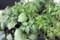 雨中に出かけて求めた「野菜苗」いろいろ。(30.5.7)