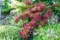 「ベニウツギ(紅空木)」、今が見頃。(30.5.25)
