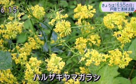 f:id:yatsugatake:20180530182129j:image