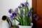 玄関に「カキツバタ(杜若)」の切り花。(30.6.5)