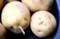 ジャガイモの「芋・地下茎」(30.6.15)
