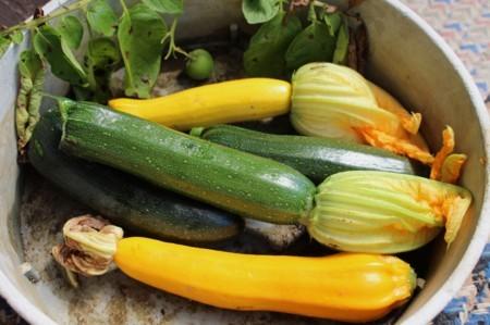 野良土産は、ズッキーニとジャガイモの果実。(30.7.1)
