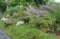 「賢治ガーデン」・南斜面。(30.7.5)