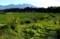 真夏の、田園風景。(30.7.30)