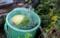 スイカ(水瓜)」を井戸水で冷やす。(30,7,31)