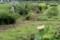 盆花が咲く、「第二賢治ガーデン」(30.8.1)