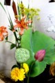 ありがたい「蓮の葉」「蓮の台(うてな)」(30.8.13)