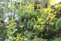 庭先の「盆花」・「オミナエシ(女郎花)」(30.8.14(