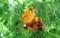 完熟、真っ赤な種子が…。(30.8.22)