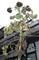 台風対策で、「ヒマワリ'(向日葵)」の収穫。(30.9..3)