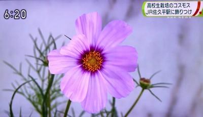 f:id:yatsugatake:20180905182726j:image