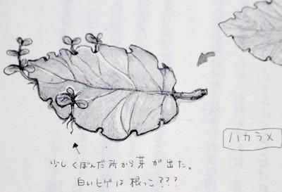 f:id:yatsugatake:20180908150826j:image