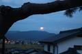 老松の枝の間に、「中秋の名月」が昇る。(30.9.24)86:039